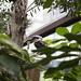 bird - toronto zoo - 1