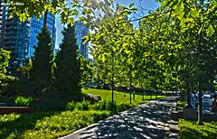 Vancouver Park (MarcellusP) Tags: park trees sky urban parco sun canada nature alberi vancouver lights skyscrapers natura columbia cielo british sole luce grattacieli