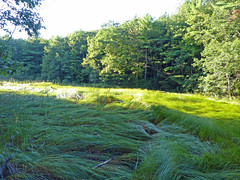 Fore River Sanctuary (lucre101) Tags: park sea bird nature grass america river portland wildlife maine trail preserve tidal sanctuary fore