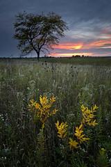 Autumn Sunset (baldwinm16) Tags: autumn sunset fall nature illinois october midwest dusk il prairie natureofthingsphotography springbrookprairienaturepreserve