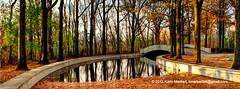 Fallen Leaves in Water (KLMP) Tags: