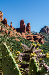 Cactus and Red Rock (Thomas Dwyer) Tags: arizona cactus southwest tom landscape photo nikon image sedona tokina redrock tomdwyer thomasdwyer