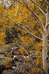 Rocky Mountain National Park-56 (AraiUSA) Tags: autumn winter snow storm mountains cold fall nature weather nationalpark colorado outdoor hiking snowy wildlife sony peak stormy alpine co elk wilderness peaks alpha aspen estespark arai kenji nex 2013 rockymountainnaitionalpark nex5n