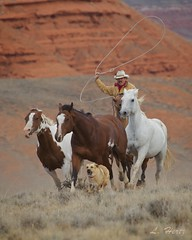 Dog _Horse3 (blackhawk32) Tags: horses west wranglers wyoming bighorn range hideout hideoutlodge