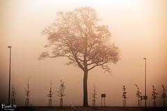 Winter tree 8 (thanks for your visit ;-)) Tags: autumn winter sun mist colour nature misty sunrise canon landscape earlymorning natuur wintertime ochtend landschap mistig 70200mm kleur vorst winterlandschap 70200mmcanon bmeijers bertmeijers