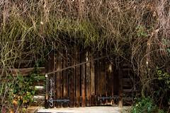 Scheunentor (- CEPhotography -) Tags: wood green barn canon eos 7d gras claus tor schloss holz taunus verlassen scheune riegel bewachsen scheunentor 24105mm ellerkamp kelkheim cephotography