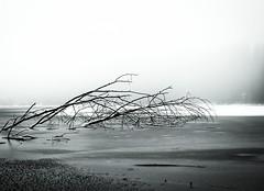 Frozen 2 (KivetOnRock) Tags: trees winter mist lake snow tree ice forest canon eos frost lumi talvi j finla ef7020028lisusmii kivetonrock vision:outdoor=099 vision:car=0678 vision:sky=0575 vision:ocean=0676