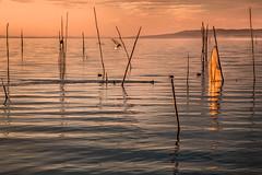 Atmosfera lacustre (da.geli) Tags: sunset italy lake umbria trasimeno mygearandme mygearandmepremium mygearandmebronze blinkagain atmosferalacustre