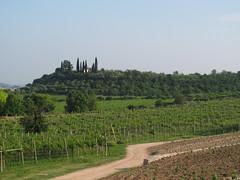 Voglio andare a vivere in campagna (ivoantolini) Tags: verde villa vino viti vede vigneti campgna vision:mountain=0788 vision:outdoor=099 vision:sky=0599 vision:plant=0674