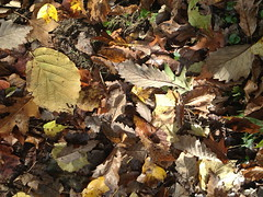"Fallen leaves • <a style=""font-size:0.8em;"" href=""http://www.flickr.com/photos/92887964@N02/12599949184/"" target=""_blank"">View on Flickr</a>"