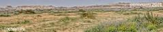 #panorama #photo #2014 #photography (photography AbdullahAlSaeed) Tags: panorama flower nature photography colorful ar cam sony sa hdr  2014 riyad          slta57  57
