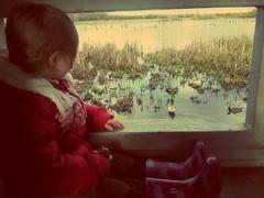 Bird Hide 52/365 210214 (Carmen's Year) Tags: bird pad ducks hide feb freya flickrandroidapp:filter=none hpad210214