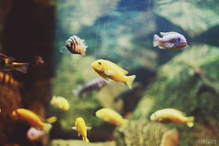 Pozna trip (Zaparowana) Tags: fish water colors canon catchycolors eos 50mm aquarium blog dof bokeh poland blogged 18 pozna 650d 18mp vision:mountain=0725 vision:sky=0719 vision:clouds=0798 vision:outdoor=0668