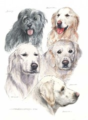 "Five Dogs portrait • <a style=""font-size:0.8em;"" href=""http://www.flickr.com/photos/64357681@N04/13109850645/"" target=""_blank"">View on Flickr</a>"