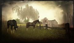 The magic of horses (Leonorah Beverly) Tags: secondlife frisland