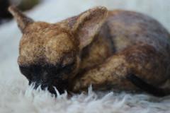 Sleeping Chihuahua Puppy (Ainigmati Studio) Tags: portrait sculpture dog pet art felted puppy soft custom lifesize chiahuahua needlefelted feltedanimal