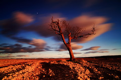 Stewart Sycamore (angus clyne) Tags: old sunset tree wonder leaving scotland is back long exposure flickr no it sycamore crap rubbish getty what load bring flick