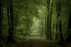 Rain Forest (derScheuch) Tags: tree green wet rain forest germany 50mm dof minolta sony trunk grn alpha wald baum regen 900 oldenburg badweather nass stamm niedersachsen lowersaxony wildenloh