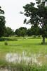 SL-1960-view rice paddies nr Bat-A-IMG_1988 (geoffgleave) Tags: cambodia paddy battambang bufallo