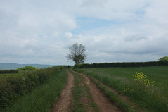 20140502-DSCF1481.jpg (Inklaar) Tags: road tree landscape boom frankrijk couches weg landschap x100 bourgondi iamnotabotanist fujifilmx100 inklaar:see=all
