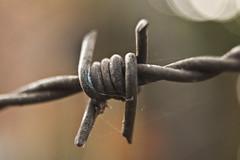 DSC00678 (Elizer Bueno - Fotgrafo) Tags: wire barbed arame farpado