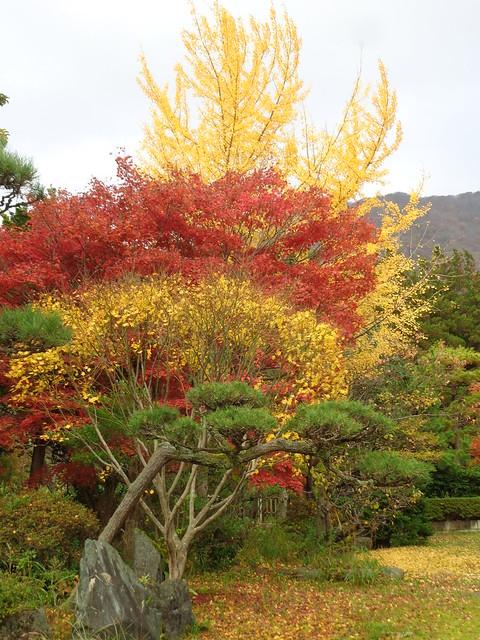 Rodamundos: JAPON, EL PAIS DEL SOL NACIENTE EN BICICLETA