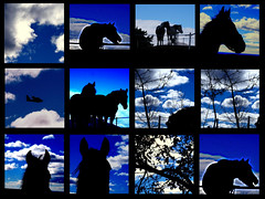 """Lo azul"" (danielavpbu) Tags: pictures madrid life morning blue light sky horse cloud colour tree nature beautiful beauty animal animals silhouette collage clouds contrast outside movement day colours shot live branches side country shape horseriding airplain airplaine"