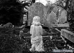 Pray WM (Jesse Davies) Tags: boy beautiful cemetery grave graveyard rose angel cross sweet praying dreams