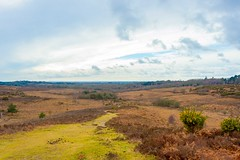 Picket Hill, New Forest, Hampshire (JackPeasePhotography) Tags: new rural forest landscape post hill hampshire views hikers plains picket a31