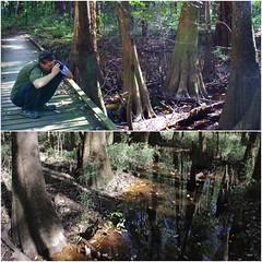 Shot of floodplain forest in Congaree (daveynin) Tags: tree forest nps southcarolina swamp wetlands boardwalk congaree baldcypress deaftalent deafoutsidetalent deafoutdoortalent
