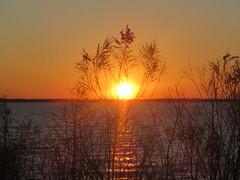 IMG_5798 (shawnzrossi) Tags: sunset mississippi brandon rossbarnettreservoir