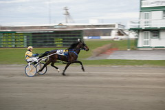 Mozartsplace 05/07/2016 (First Race) (Taylor Racing) Tags: red racing ponder harness shores pei charlottetown artsplace mozartsplace