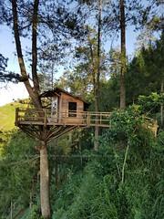 Mine There (niyudz) Tags: wood house tree green nature architecture indonesia design treehouse local malang eastjava jawatimur batumalang omahkayu