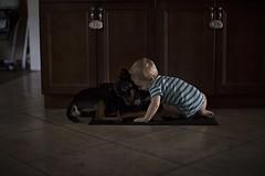 45/365 (J. Lee Syn) Tags: griswolds365 365 threesixtyfive jleesyn childhoodunplugged letthekids letthembelittle clickinmoms realmomtogs momtog subjectlight lightinspired stillaboy basenji puppylove