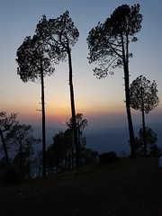 20160516_185208 (Tarun Chopra) Tags: india photography binsar utrakhand samsungs7