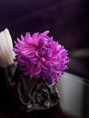 @Yen, W Hotel Taipei (h329) Tags: flower taiwan taipei  yen whotel omd 25mm    em5 m34  t095 hyperprimeslrmagic