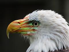 Old Glory (Mel's Looking Glass) Tags: old usa stars freedom glory stripes flag bald