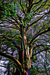 Tree Energy (Alex M. Wolf) Tags: tree garden botanical energy fuji energie zurich zrich baum zurigo lebensenergie alexmwolf xe2s