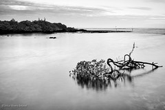 IMG_4142-Edit-Edit (jrbelaval) Tags: longexposure blackandwhite naturaleza blancoynegro beach nature canon landscape ecuador playa paisaje ec 6d largaexposicin puertoayora islasgalpagos