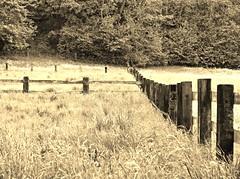 Fence (SabineausL) Tags: sepia fence lumix mono wiese panasonic zaun 2016 sabineausl tz61 dmctz61