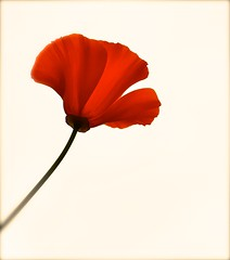 Red (Edinburgh Photography) Tags: red flower nature water nikon edinburgh leith d7000