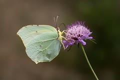 Elegancia (Piagor) Tags: naturaleza butterfly alas mariposa