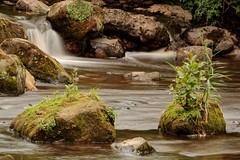 River Esk Growth (Antony Fleming) Tags: river landscape flow rocks northyorkshire grosmont esk