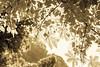 Summer can come (Michael Hiebaum) Tags: life park shadow orange brown sunlight white tree nature leaves sepia contrast canon austria michael daylight österreich spring warm ast outdoor natur foliage adobe braun tageslicht graz kontrast blätter schatten baum contour beatiful leben steiermark stadtpark citypark frühling styria daydreaming lightroom bough weis schön sonnenlicht einfarbig kontur drausen tagträume lebensspender hiebaum
