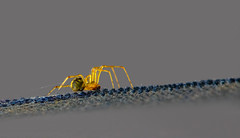 A small visitor on our boat (Juergen Huettel Photography) Tags: spider macro insect boat nature natur spinnen makro jhuettel