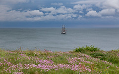 Tall Ship and Pink Thrift. IMG_6335 (s0ulsurfing) Tags: s0ulsurfing 2016 isle wight coast coastal coastline weather clouds pink thrift flowers