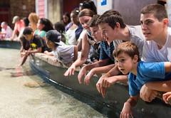 First Encounter (mattchez) Tags: family atlanta kids children 50mm nikon learning georgiaaquarium nikkor dslr d800 animalencounter f14g