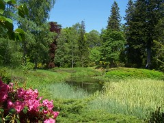 Touch of Pink, Balmoral Castle Gardens, Royal Deeside, June 2016 (allanmaciver) Tags: pink blue trees sky green water reeds pond warm low royal rhododendron temperature shelter viewpoint balmoral enclosed deeside allanmaciver