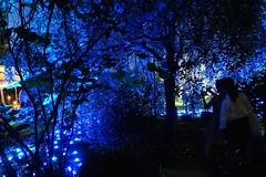 Tanabata 'Star Festival' Illuminations at Shukkei-en Garden (GetHiroshima) Tags: summer illuminations hiroshima tanabata  gethiroshima    shukkeiengarden