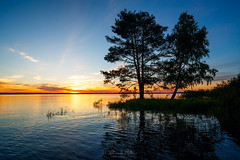 Sunset on the lake with a large pine and birch (czdistagon.com) Tags: lake water beautiful reflection sunset tree peaceful environment background scenic nature landscape sky summer pine cloud rural russia beauty birch sunlight rustic grass dark pinetree scene mirror wildlife outdoors vibrant outside orange sunny leaf serene flora picturesque yellow distagont2821